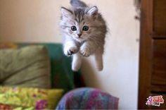 Resultado de imagen para gatitos