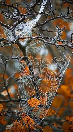 nature gets ready for Halloween....