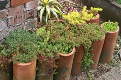 Clay drain pipes filled with succulents line an entranceway, softening the lines of a cement walk. Succulent Landscaping, Succulent Planters, Planter Pots, Succulents, Chimney Pot Planter, Garden Edging, Side Garden, Drain Tile, Clay Pipes