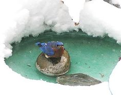 Attracting Birds with Birdbaths | The Cornell Lab of Ornithology All About Birds
