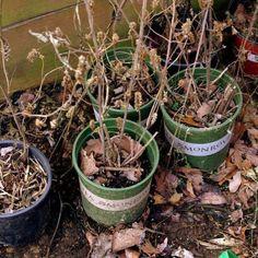 Πως θα «αναστήσετε» τα μισοπεθαμένα σας φυτά Vegetable Garden, Agriculture, House Plants, Home And Garden, Backyard, Nature, Flowers, Gardening, Cook