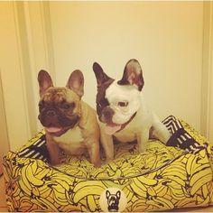 Top Dog - cama para cachorro mix de estampas
