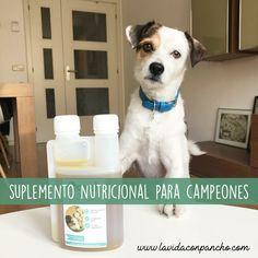 Hablamos sobre un suplemento nutricional para nuestras mascotas y te contamos todos sus beneficios. #suplementonutricional #aceitesnaturales #suplementosparaperros #alimentacionparaperros Champs, Pets, Life