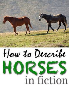 How to describe horses in fiction, with equestrian expert Amy McKenna. Part of the series by Dan Koboldt Writing Websites, Writing Checklist, Writing Memes, Writing Lessons, Writing Advice, Writing Resources, Writing A Book, Writing Prompts, Fiction Writing