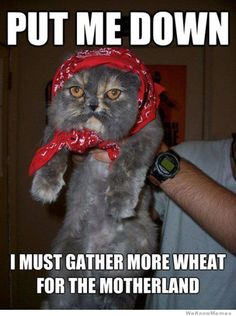 Put Me Down #catoftheday