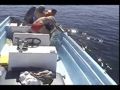 Un homme va faire une découverte choquante en s'approchant d'une baleine...  A shocking discovery...