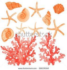 Set of different sea shells,corals and starfish. Watercolor vector illustration. Global color used. - stock vector