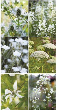 3 White garden flower choices summer performers – My All Pin Page Night Garden, Moon Garden, Diy Garden, Shade Garden, Beautiful Gardens, Beautiful Flowers, White Gardens, Colorful Garden, Types Of Flowers