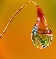 Sunrise dewdrop