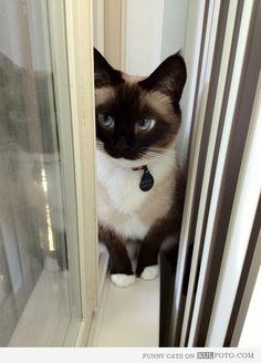 Cat beauty*
