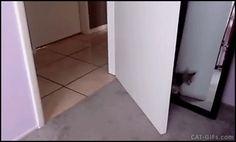 Animated KITTEN GIF • Presumptuous Kitten attack on dad epic fail Kitty is knocked down!