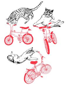 cats on bmx bikes. Crazy Cat Lady, Crazy Cats, I Love Cats, Cool Cats, Bike Illustration, Gatos Cats, Cycling Art, Bike Art, Moon Art