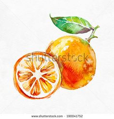 Orange fruit  isolated on white background.Watercolor painting. - stock photo