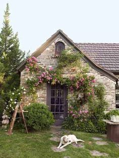 1037 Tudor cottage, covered in a mix of 'Veilchenblau' and 'New Dawn' climbing roses.