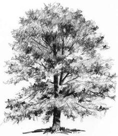 Oh Esmerelda... Our cottonwood tree