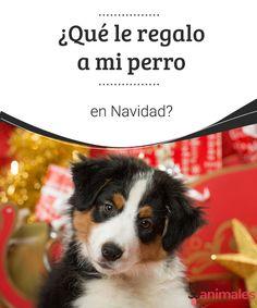 ¿Qué le regalo a mi perro en Navidad? Un can es un miembro más de la familia. Por tal motivo, te contamos algunas opciones de regalos que puedes dar a tu perro en la Navidad. #perro #regalo #navidad #consejos