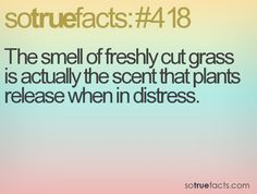 I feel guilty now for enjoying that smell