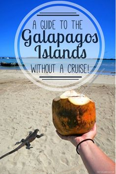 A complete guide to visiting the Galapagos Islands without a cruise!