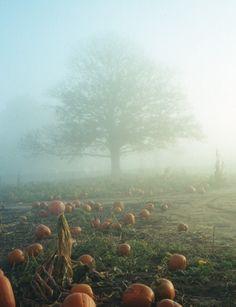 Good Morning Sunshine ~ Happy HALLOWEEN Morning [OC] - Imgur