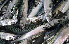 El número de capturas y el tamaño de los peces disminuyen