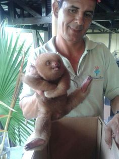 Baby sloth--LOOK AT HIM!!! Look at that smile!!!