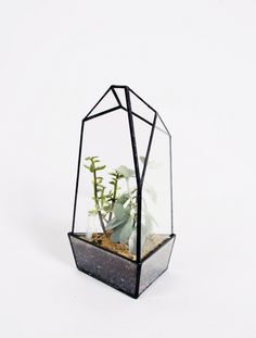 """5.5""""X11""""  Small Quartz  -$140-7""""X12""""  Quartz No. 1  -$320-8.5""""X11""""  Quartz No. 2  -$340-8""""X15""""  Quartz No. 3  -$360-  PermalinkFiled under glass, terrariums, plants, crystals"""