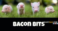 Images of the week, 75 images. Bacon Bits