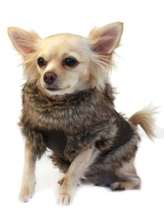 ON SALE! Luxury Brown Leather and Fur Lined Dog Coat! Totally Cute!