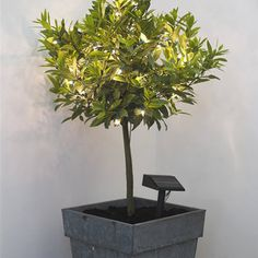 LED Solar Outdoor Tree Lights - contemporary - outdoor lighting - by Cox & Cox