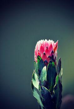 Suid-Afrikaans en vol liefde - wys jou ma jy gee om vir haar hierdie Moedersdag