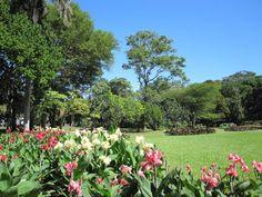 Durban #BotanicGardens is #Durban's oldest public institution and #Africa's oldest surviving botanical gardens.