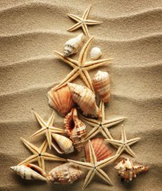 christmas beach tree trees holiday coastal shell shells xmas cards sea tropical night merry before twas beachy happy card seashell Caribbean Christmas, Tropical Christmas, Beach Christmas, Coastal Christmas, Very Merry Christmas, Christmas In July, Christmas Crafts, Christmas Decorations, Christmas Trees