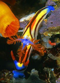 Is that sea slug about to be eaten? o_O