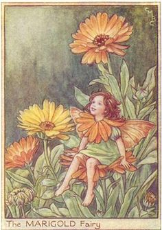 The Marigold Fairy