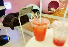 Pin for Later: 15 Ridiculously Awesome Animal Cafes That You Can Visit Puppy Cafe Sangsang Dabang, Seoul, South Korea There is no entrance fee to SangSang Dabang, but make sure to order a drink to enjoy time with the resident pups!