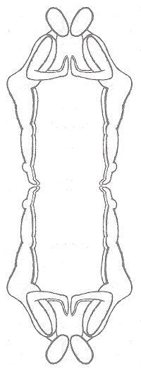 symmetrische vormen