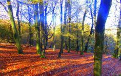 erdei képek, ősz háttérképek, természetfotók, fák hátterek ...