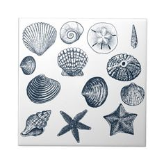 seashell images for tattoo