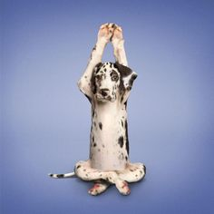 View the Yoga animals photo gallery on Yahoo News. Find more news related pictures in our photo galleries.