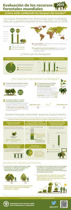 Infografía: ¿Cómo están cambiando los bosques del mundo?