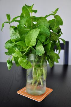How To Preserve Fresh Mint. Both ways have worked well for me. It's weird how different mint and basil are to store