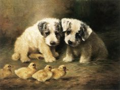 Dog Paintings - Sealyham Puppies and Ducklings by Lilian Cheviot Sealyham Terrier, Dog Artwork, Dog Design, Animal Paintings, Beautiful Dogs, Art Reproductions, Fine Art America, Fine Art Prints, Poster Prints