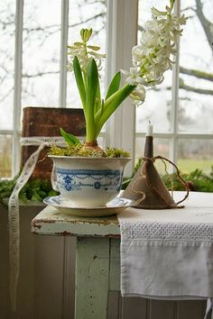 Adeus Inverno, Bem Vinda A Primavera!