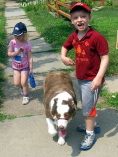 Amadeus, walking the grandkids. Australian Shepherd, Grandkids, Walking, Aussie Shepherd, Walks, Hiking