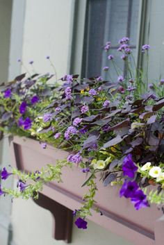 purple window box: purple petunia, dark purple sweet potato vine, pale yellow million bells and lavender Verbena bonariensis (my best guesses for what the plants are)