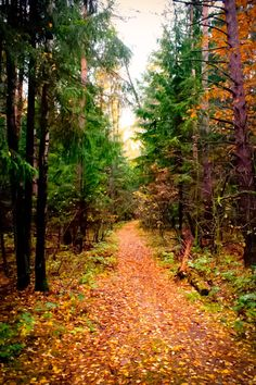 Path in the fall forest (Russia) by Mikhail Medvedev