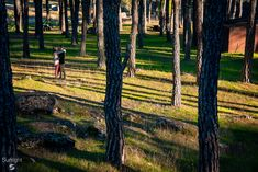 Raquel + Sergio Preboda @ Cadalso Madrid, España. Passion Photography, Outdoor Furniture, Outdoor Decor, Sunlight, Couple, Plants, Sun Light, Nikko, Couples