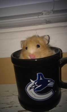 'Canuckize your Pet' Contest - - Vancouver Canucks - Photos Vancouver Canucks, Nhl, Photos, Fans, Weather, Animals, Pictures, Animales, Animaux