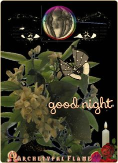 Archetypal Flame - good night  good night (English)  Καληνύχτα (Greek)  buenas noches (Spanish)  boa noite (Portuguese )  buona notte (Italian)  bonne nuit (French)  goede nacht (Dutch)  Gute Nacht (German)  доброй ночи (Russian)  laku noć (Croatian)  おやすみ (Japanese)  #Goodnight #buenasnoches #Καληνύχτα #goedenacht #GuteNacht #buonanotte #lakunoć #boanoite #bonnenuit #добройночи #おやすみ #archetypalflame #beauty #health #inspiration #gif #GIFS
