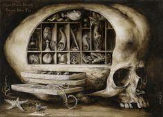 Amazing antique wunderkammer skull illustration,